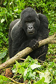 PRM 01 MC0077 01