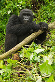 PRM 01 MC0078 01