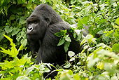 PRM 01 MC0080 01