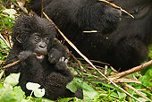 PRM 01 MC0081 01