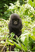 PRM 01 MC0082 01