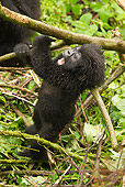 PRM 01 MC0083 01