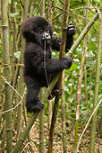 PRM 01 MC0085 01
