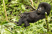 PRM 01 MC0087 01