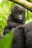 PRM 01 MC0089 01