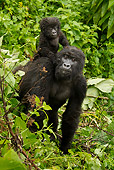 PRM 01 MC0090 01