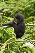 PRM 01 MC0092 01