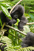 PRM 01 MC0093 01