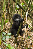 PRM 01 MC0094 01