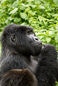 PRM 01 MC0100 01