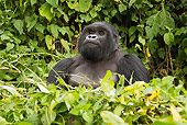 PRM 01 MC0103 01