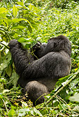PRM 01 MC0105 01