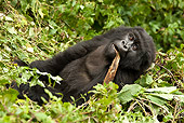PRM 01 MC0109 01