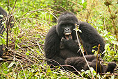PRM 01 MC0111 01