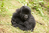 PRM 01 MC0112 01