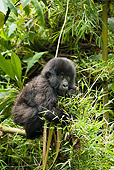 PRM 01 MC0113 01