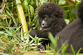 PRM 01 MC0114 01