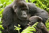 PRM 01 MC0119 01