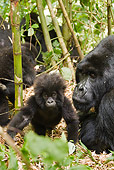 PRM 01 MC0123 01