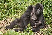 PRM 01 MC0124 01