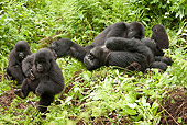 PRM 01 MC0126 01