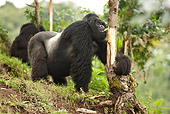 PRM 01 MC0127 01