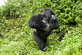 PRM 01 MC0129 01