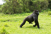 PRM 01 MC0132 01