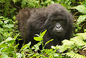 PRM 01 MC0133 01