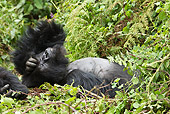 PRM 01 MC0134 01