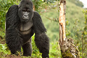 PRM 01 MC0135 01