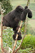 PRM 01 MC0136 01