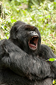 PRM 01 MC0138 01