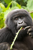 PRM 01 MC0141 01