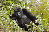 PRM 01 MC0142 01