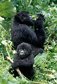 PRM 01 MH0001 01