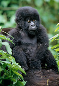 PRM 01 MH0003 01