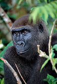 PRM 01 MH0005 01