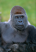 PRM 01 MH0006 01