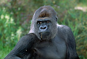 PRM 01 MH0007 01