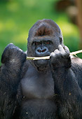 PRM 01 MH0010 01
