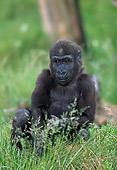 PRM 01 MH0012 01