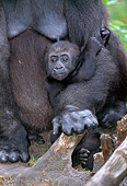 PRM 01 MH0014 01