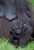PRM 01 MH0015 01