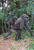 PRM 01 MH0018 01