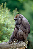 PRM 01 MH0021 01