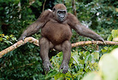 PRM 01 MH0022 01