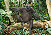 PRM 01 MH0023 01
