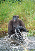 PRM 01 MH0026 01