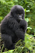 PRM 01 WF0001 01